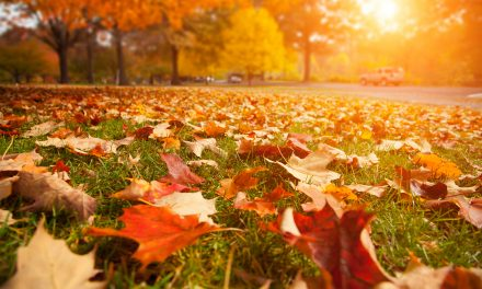 15 Budget Friendly Fall Activities